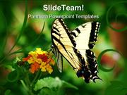 Swallowtail Butterfly Animals PowerPoint Templates And PowerPoint Back