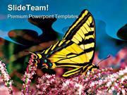 Swallowtail Butterfly Nature PowerPoint Templates And PowerPoint Backg