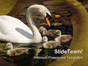 Swan Stroll Animals PowerPoint Themes And PowerPoint Slides ppt design
