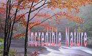 Incredible Nature (NXPowerLite)