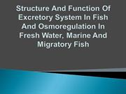 Structure And Function Of Excretory System In Fish