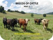 BREEDS OF CATTLE part 1