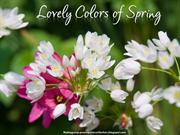 Lovely Colors of Spring (2)