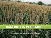RANCIDITY IN PEARL MILLET
