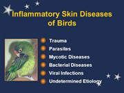 Inflammatory Skin Lesions of Pet Birds