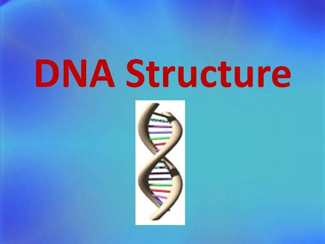 12 1 dna structure authorstream dna structure powerpoint malvernweather Choice Image