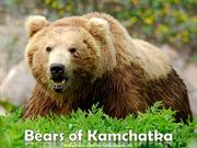Bears of Kamchatka