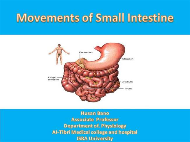 Movements of Small Intestine |authorSTREAM