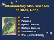 Avian Dermatitis, Part two