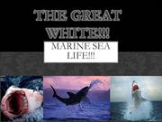 MARINE SEA LIFE AND THE GREAT WHITE!!!