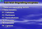 Cell wall degrading enzymes