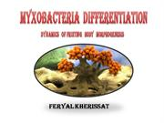 Myxobacteria Differentiation