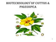 Biotechnology of cotton &  pigeonpea