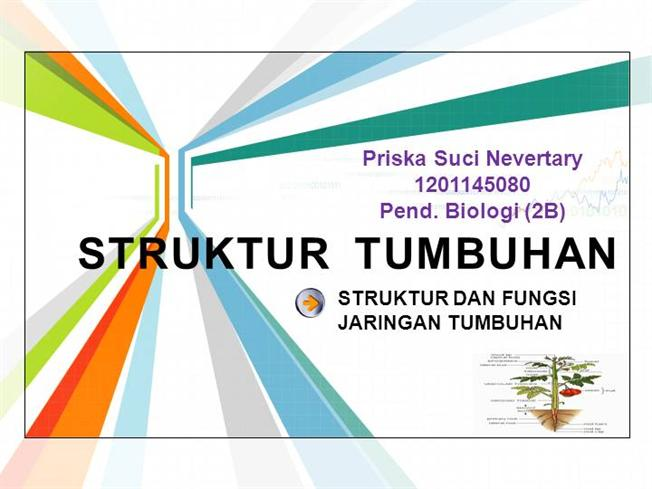 Struktur tumbuhan sma kelas xi oleh priska suci nevertary authorstream ccuart Image collections