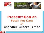 Fetch pet care and pet care in chandler Gilbert Tempe.