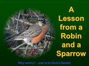 Lessons from a Robin and a Sparrow