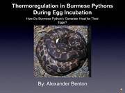 Thermoregulation In Burmese Pythons While Brooding