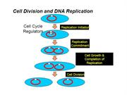 DNA - Replication and Repair