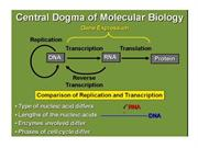 DNA - Structure and Organization