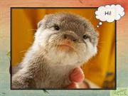 Baby Otters Plead