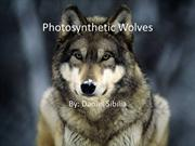 Photosynthetic Wolves