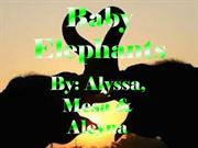 baby_elephantsgg2