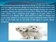 Choices For Doggy Allergies Remedy