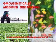 GMO(genetically modified organisms) final