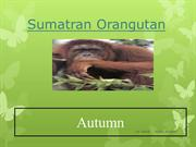 Endangered Animals Autumn