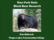 Black Bear Research at FLCC