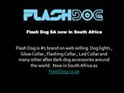 Dog lights, Glow Collar, Flashing Collar from FlashDog now in South Af