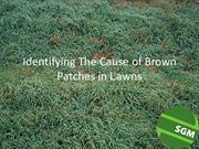 Identifying The Cause of Brown Patches in Lawns
