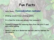APBioProject-Fun Facts