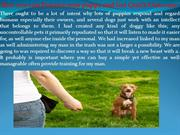 How you can Practice your puppy and Get Quick Outcome!