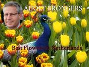 Aijolt Brongers- Best Flowers in Netherlands