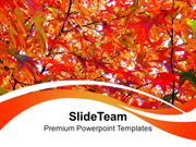 Autumn Leaves Nature PowerPoint Templates PPT Themes And Graphics 0213