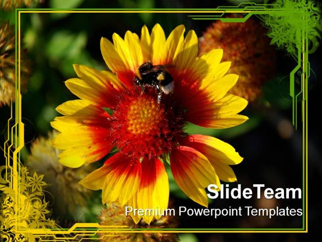 Flower With Honey Bee Nature Powerpoint Templates Ppt Themes And G