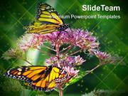 Monarch Butterfly Flowers Nature PowerPoint Templates PPT Themes And G
