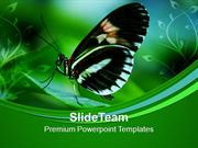 Papilio Butterfly On Leaves Nature PowerPoint Templates PPT Themes And