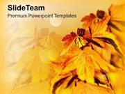 Autumn Leaves Background Beauty PowerPoint Templates PPT Themes And Gr