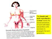 The female and male reproductive systems