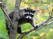 Animals in Beauty (15)