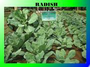 KDSI KING HUMUSPLUS PRESENTATION ORGANIC FERTILIZER - Part 3