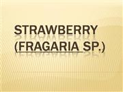 Strawberry swot analysis