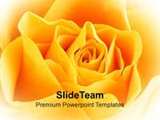 Yellow Rose Beauty PowerPoint Templates PPT Themes And Graphics 0213