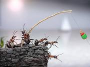 602-Ants at work
