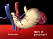 Digestive system powerpoint template authorstream digestive system powerpoint template toneelgroepblik Choice Image
