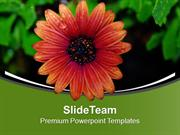 Beautiful Flower For Joy Theme PowerPoint Templates PPT Themes And Gra