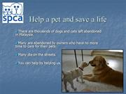 Let's us help our abandoned pets