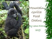 Mountain Gorilla Food Chains